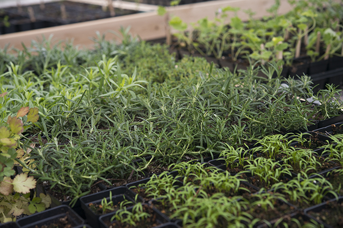 Seeds and Cuttings | Kelly Orzel