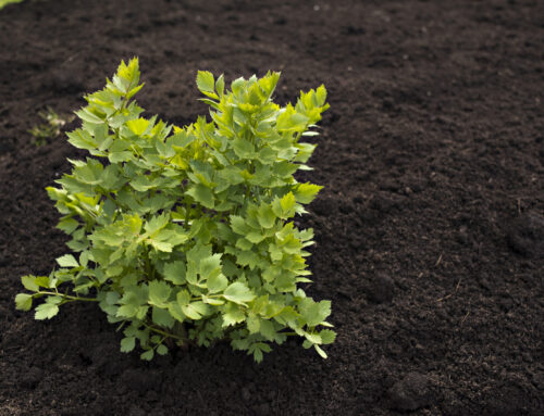 Healthy Soil and the Top 3 Myths
