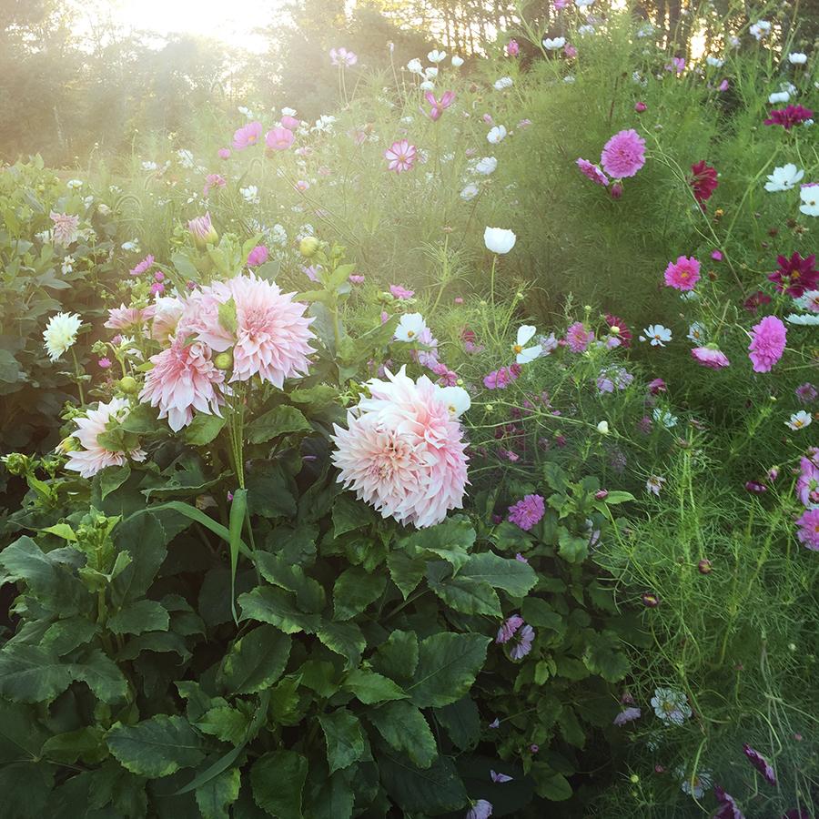 Garden Selfie | Kelly Orzel