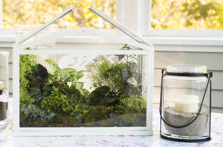 Terrariums - Growing Under Glass