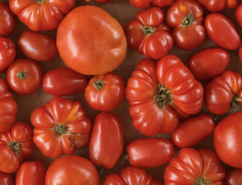 10 Tips for Growing Amazing Tomatoes