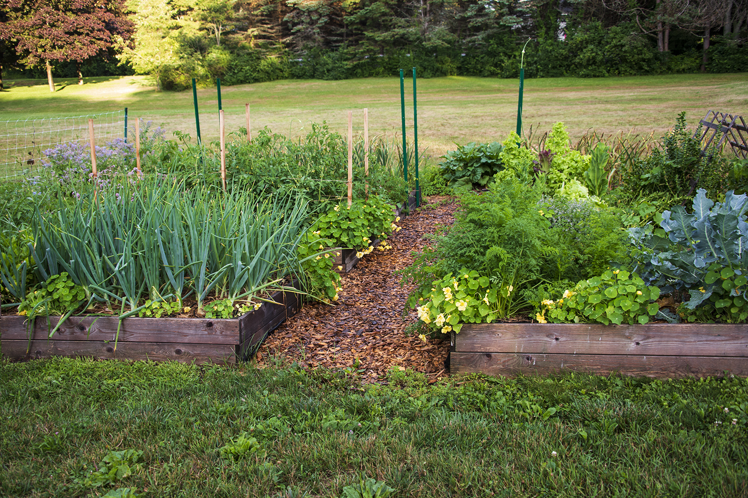 Garden planning | Kelly Orzel