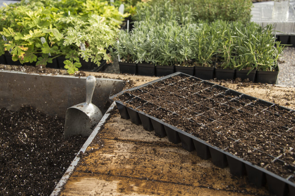 Seed Starting for Beginners: How to Sow Seeds in 5 Easy Steps | Kelly Orzel