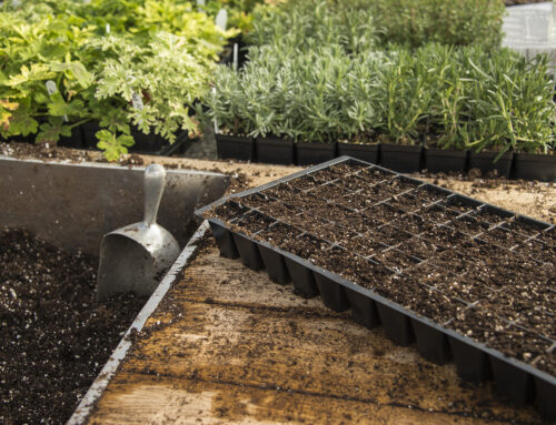 Seed Starting for Beginners: How to Sow Seeds in 5 Easy Steps