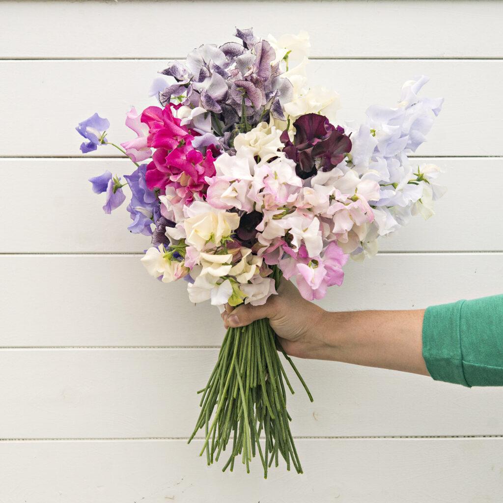 Annual Flowers: Sweet Peas | Kelly Orzel
