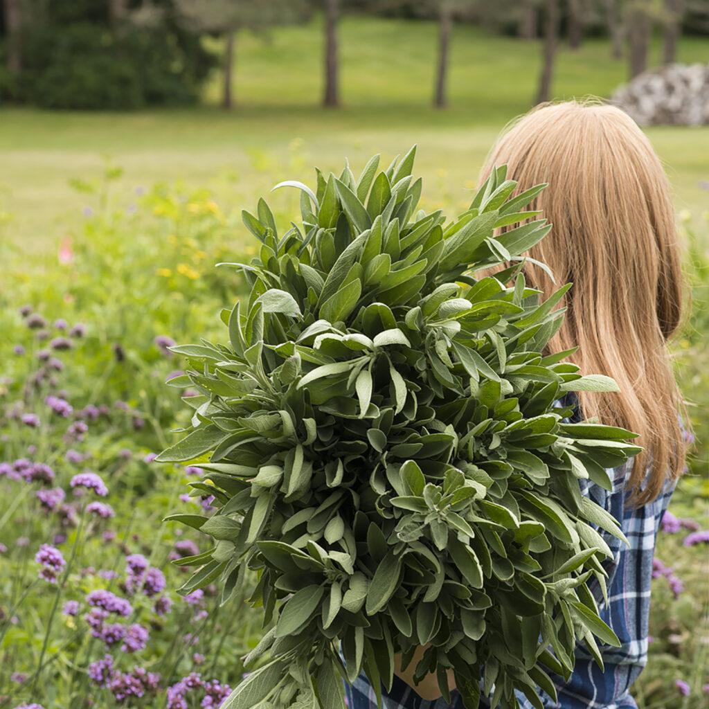 Beginner's Guide to Pinching Plants | Kelly Orzel