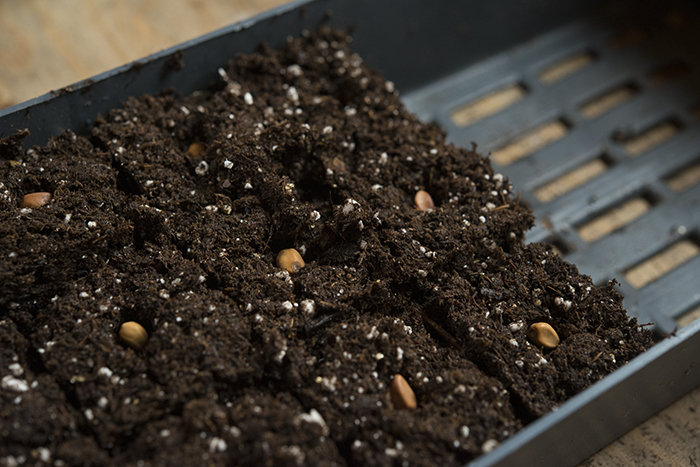 Sowing Seeds | Kelly Orzel