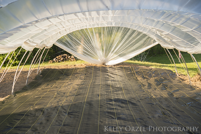 Happenings Here on the Farm | Kelly Orzel