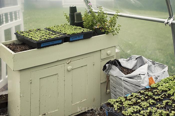 Growing on the Farm | Kelly Orzel