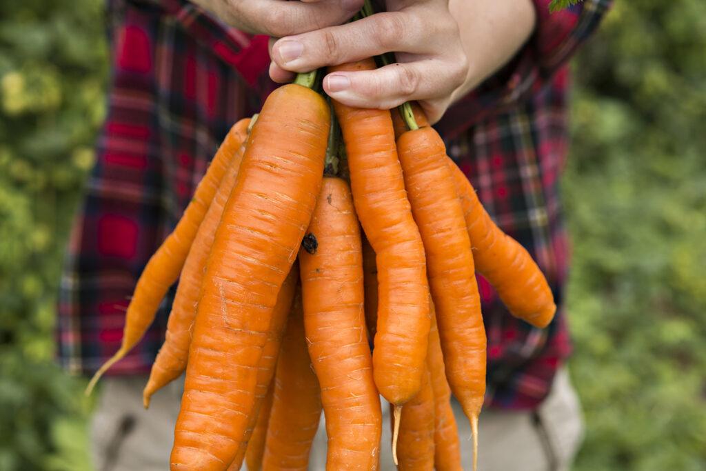 Top 10 Veggie Garden Must-Haves - Chantenay Carrots | Kelly Orzel