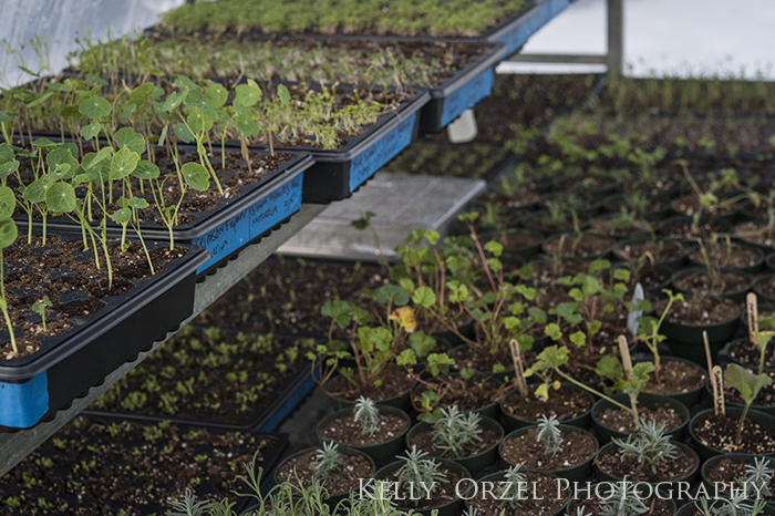 Sowing and a Growing | Kelly Orzel