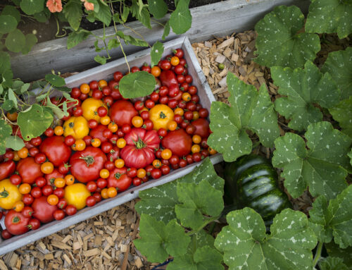 10 Vegetable Garden Must-Haves