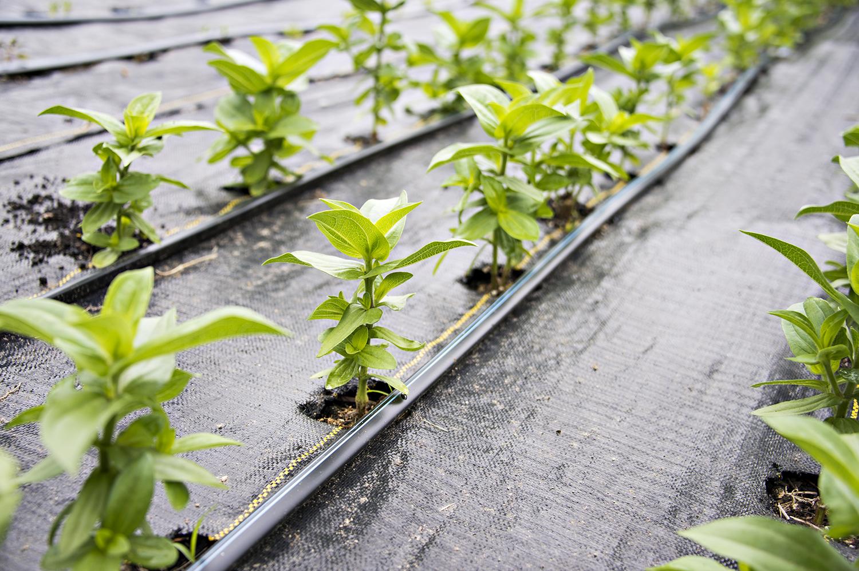 Pinching Plants for Beginners | Kelly Orzel