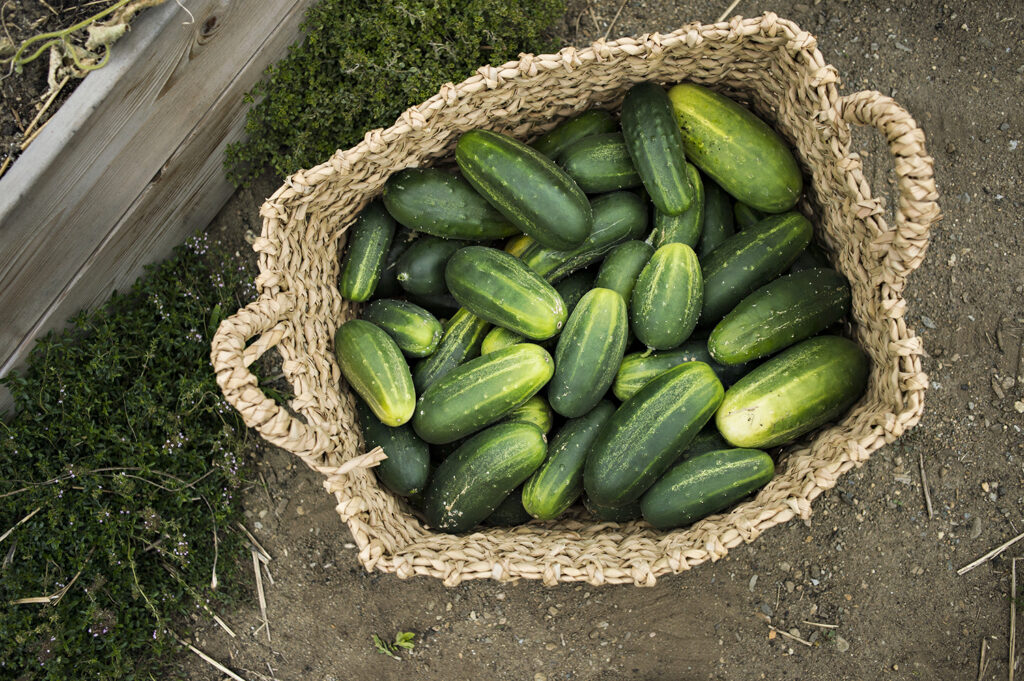 Top 10 Vegetable Garden Must-Haves | Kelly Orzel