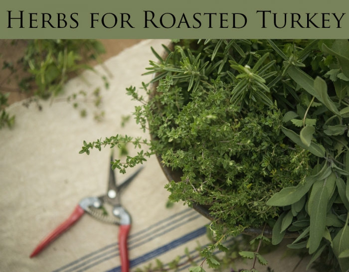 Thankful, Herbs for Thanksgiving Turkey | Kelly Orzel