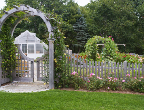 Common Garden Mistakes