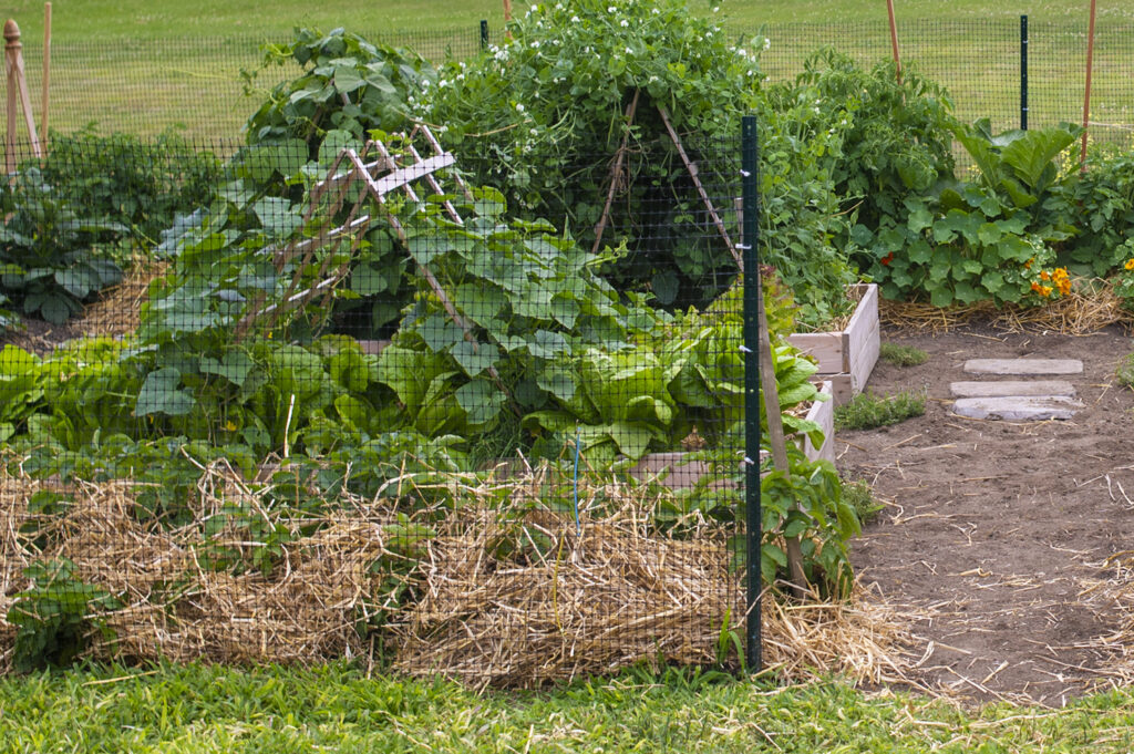Common Garden Mistakes | Kelly Orzel