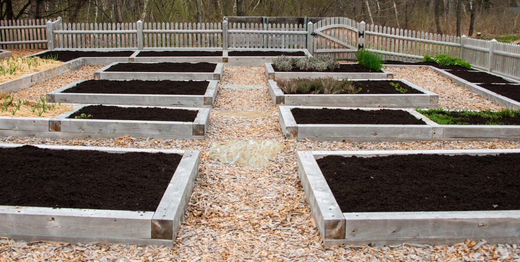 Applying Mycorrhizal fungi to Garden Bed | Kelly Orzel
