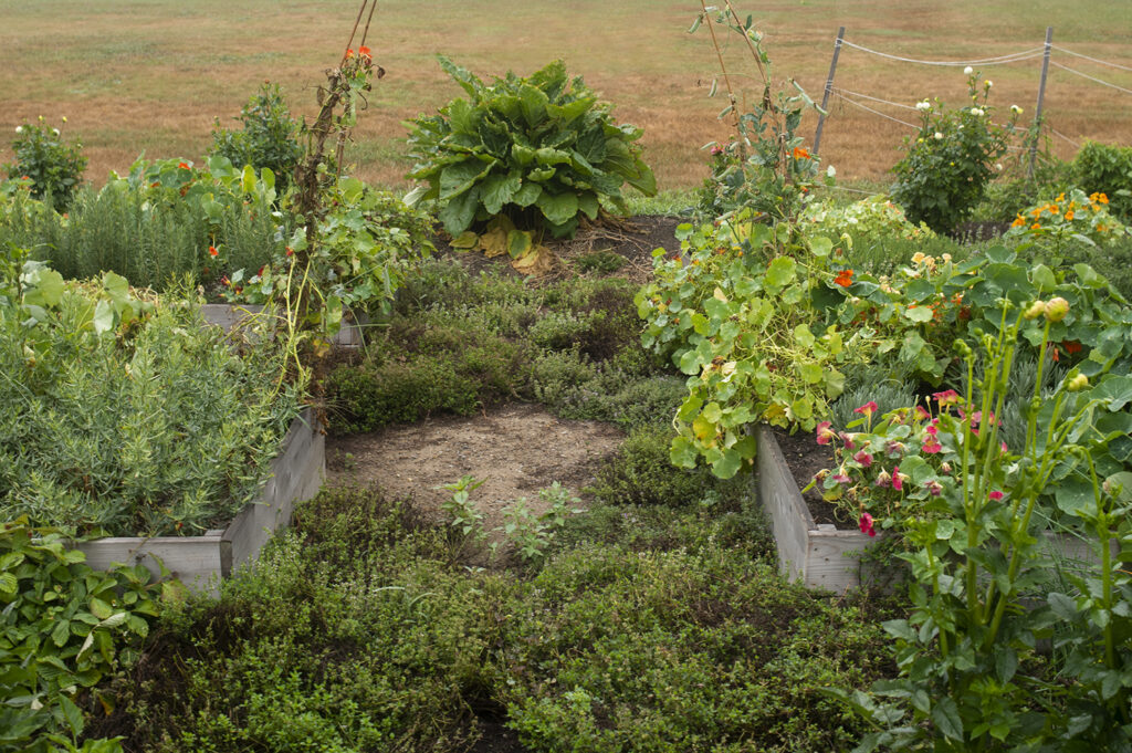 Garden needing weeding | Kelly Orzel