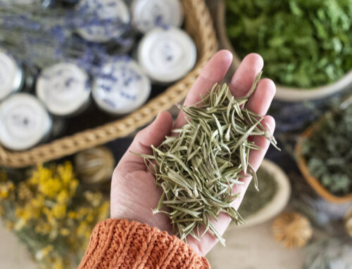 Edible Herbs to Grow in the Garden for the Kitchen