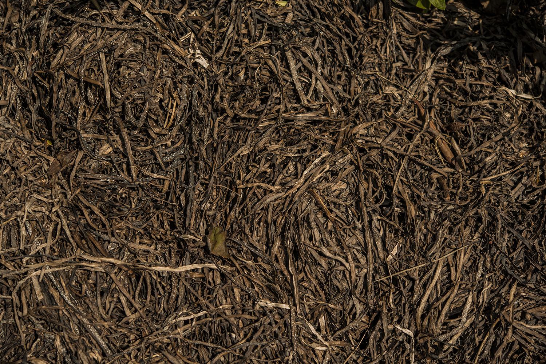 Seaweed Mulch | Kelly Orzel