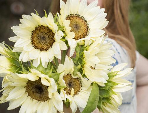 6 Reasons to Grow Sunflowers