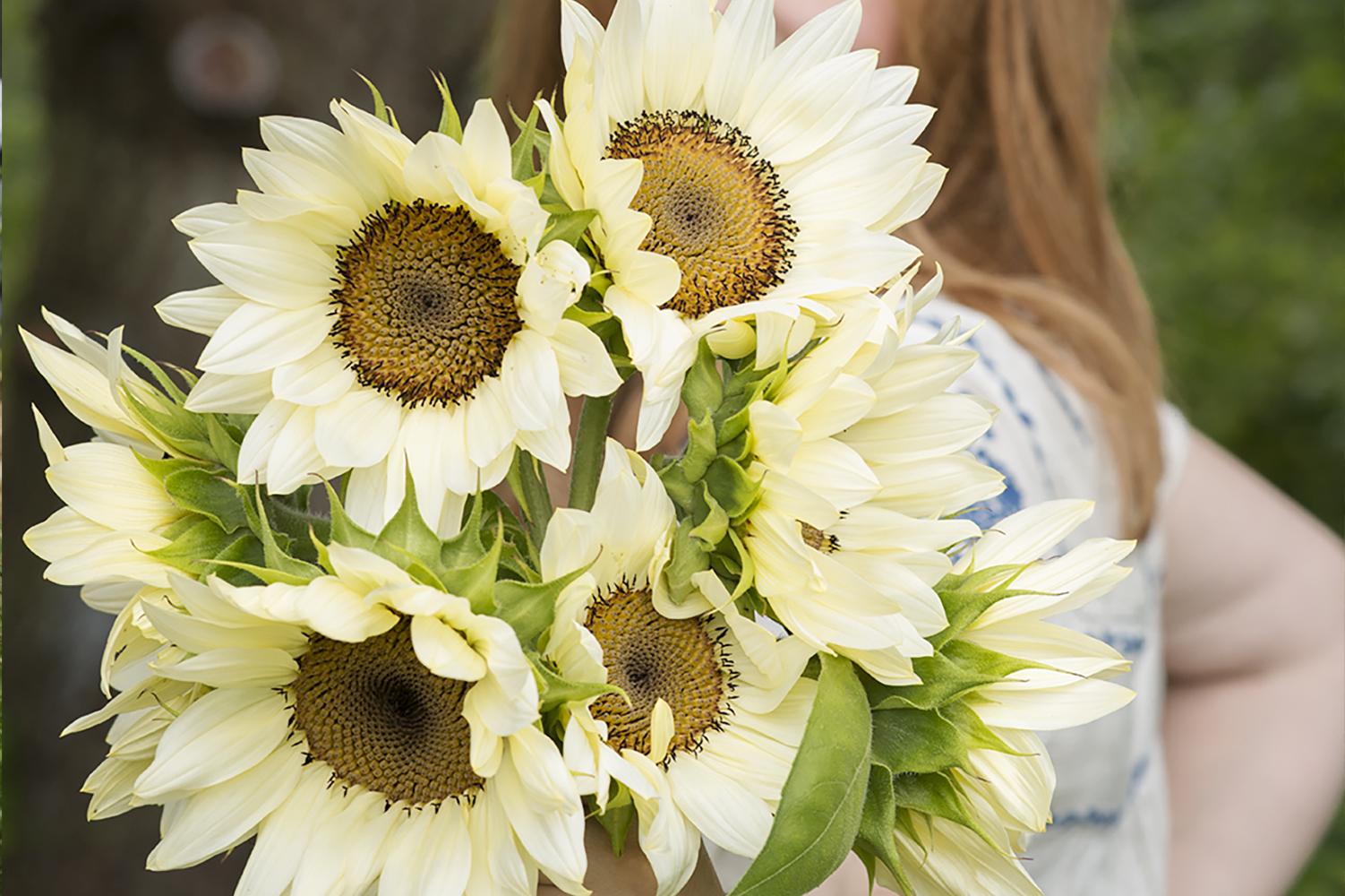6 Reasons to Grow Sunflowers | Kelly Orzel