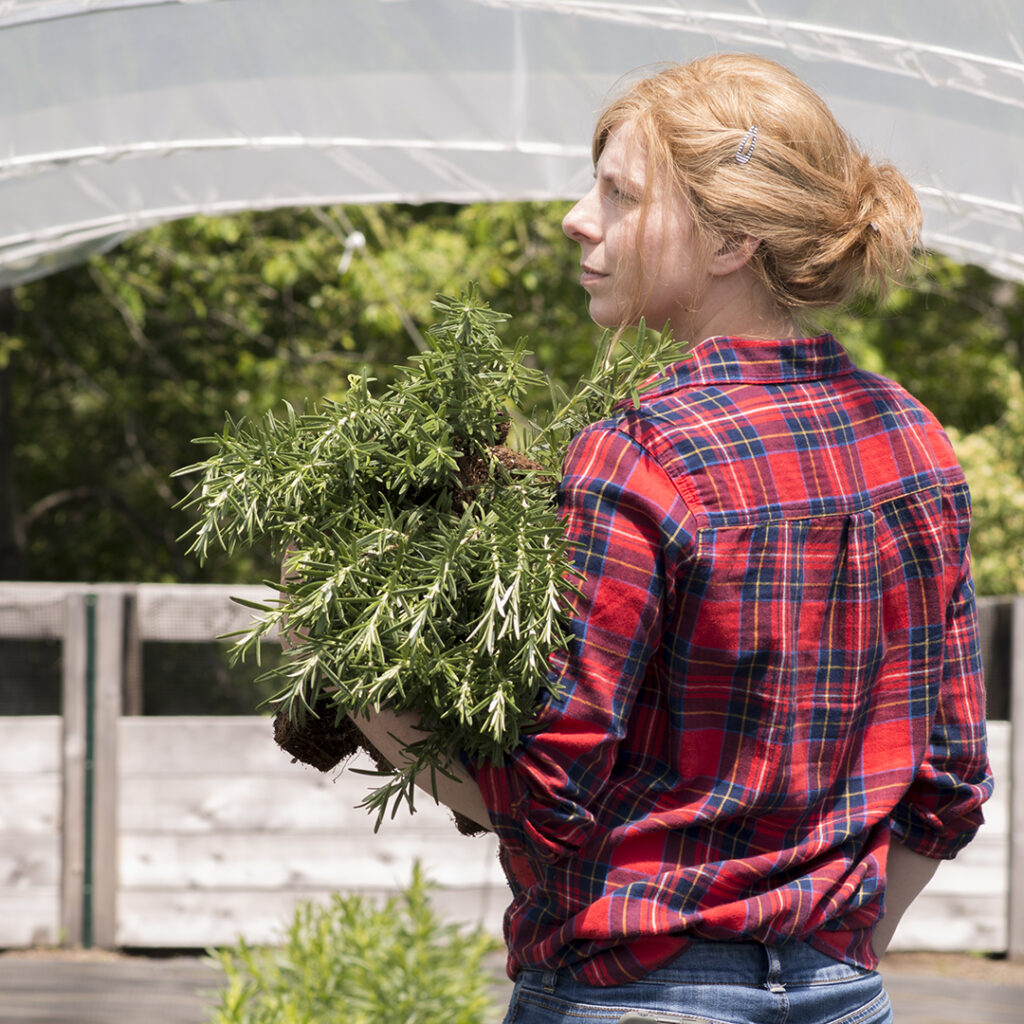 Planting Rosemary | Kelly Orzel